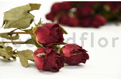 Rose séchée - Bouquet 20 Tiges - Rouge Foncé