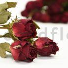 Dried Rose - Bouquet 20 Stems - Dark Red