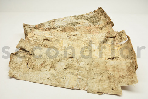 Birch Bark - 5 Units - Natural