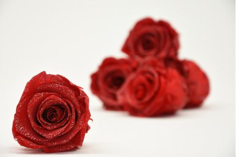 Stabilized rose Kiara L - Box of 8 - Red Glittery Silver