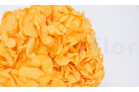 Stabilized Extra Hydrangea - Pastel Sulfer Yellow