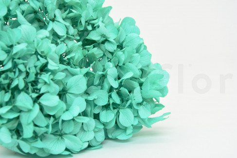 Hortensia Stabilisé - Pastel Tiffany