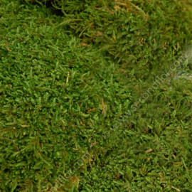 Mousse Plate Stabilisée / 2.5 Kg - Vert
