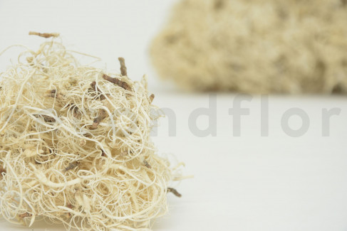 Curly moss teintée - 1 Sachet - Blanchi