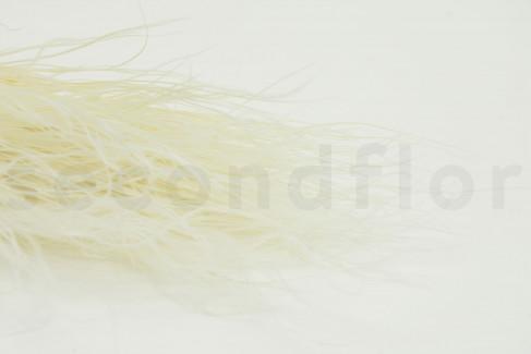 Stypa pennata - Blanc