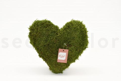 Coeur de Mousse plate stabilisée - 30 cm