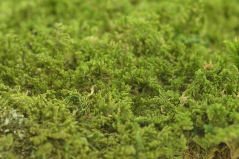 Musgo Bola Preservado SecondFlor - Caja grande - Verde