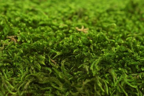 Mousse Plate Stabilisée / 500 g - Vert