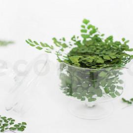 Adianthum en pièce Stabilisée - Vert