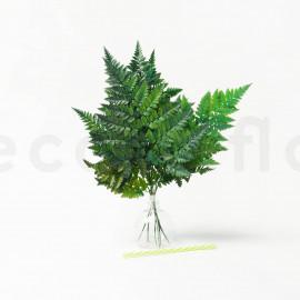 Fougère Cuir Stabilisée - Vert