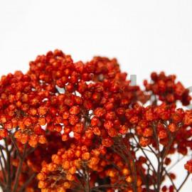Diosmi Stabilisé - Orange