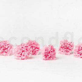 Preserved Carnation L - Box of 6 - Light Pink