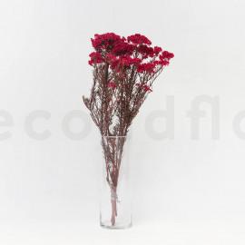 Diosmi Stabilisé - Rouge Géranium