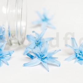 Tubéreuse Stabilisée S boîte de 12 - Bleu Clair