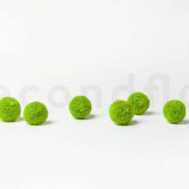 Chrysanthème Ping Pong Stabilisé M boîte de 6 - Vert