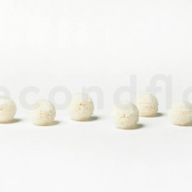 Chrysanthème Ping Pong Stabilisé M boîte de 6 - Blanc