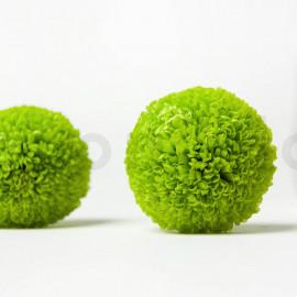 Chrysanthème Ping Pong Stabilisé M - Boîte de 6 - Vert