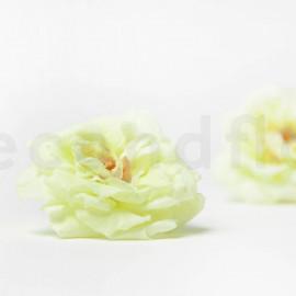Rose Sauvage Stabilisée M - Boîte de 12 - Vert Clair