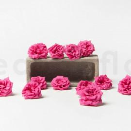 Preserved Wild Rose M box of 12 - Fuchsia