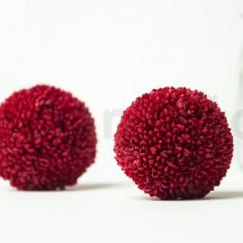 Chrysanthème Ping Pong Stabilisé M boîte de 6 - Bordeaux