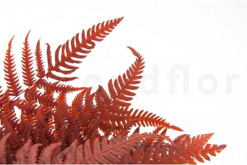 Stabilisierte Pergamentfarn - Rot