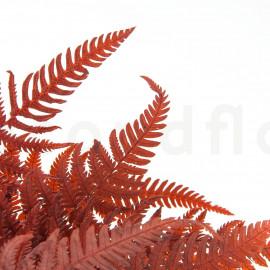Fougère Parchemin Stabilisée - Rouge
