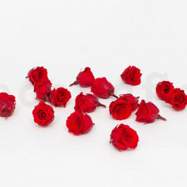 Preserved Princess Rose S box of 16 - Red