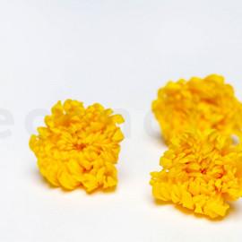 Chrysanthème Mille Feuilles Stabilisé M boîte de 6 - Jaune