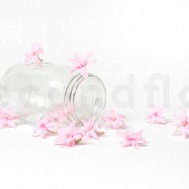 Tubéreuse Stabilisée S boîte de 12 - Rose Clair