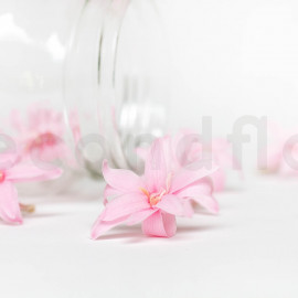 Tubéreuse Stabilisée S - Boîte de 12 - Rose Clair