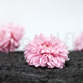 Dahlia Stabilisé XL boîte de 3 - Rose Clair