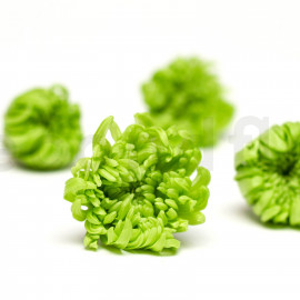 Chrysanthème Mille Feuilles Stabilisé M boîte de 6 - Vert