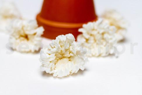 Crisantemo de Milhojas Preservado M x6 - Blanco