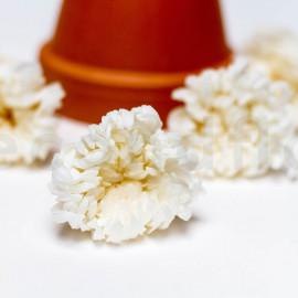 Chrysanthème Mille Feuilles Stabilisé M boîte de 6 - Blanc
