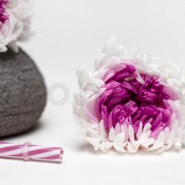 Chrysanthème Mille Feuilles Stabilisé XL boîte de 6 - Blanc+Violet