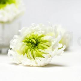 Chrysanthème Mille Feuilles Stabilisé XL - Boîte de 6 - Blanc + Vert