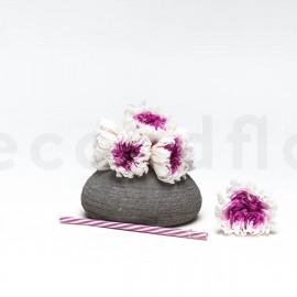 Chrysanthème Mille Feuilles Stabilisé XL - Boîte de 6 - Blanc + Violet