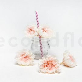 Preserved Chrysanthemum XL box of 6 - White + Pink