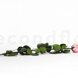 Preserved Rose on Stem L box of 1 - Jumbled - Light Pink