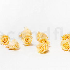 Preserved Rose M box of 9 - Champagne
