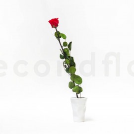 Preserved rose on stem jumbled L - Box of 1 - Red