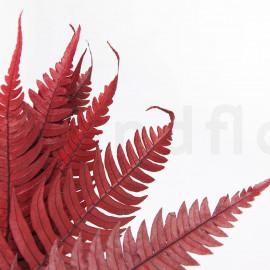 Fougère Rock Stabilisée - Rouge