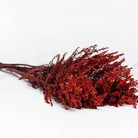 Solidago Stabilisé - Rouge