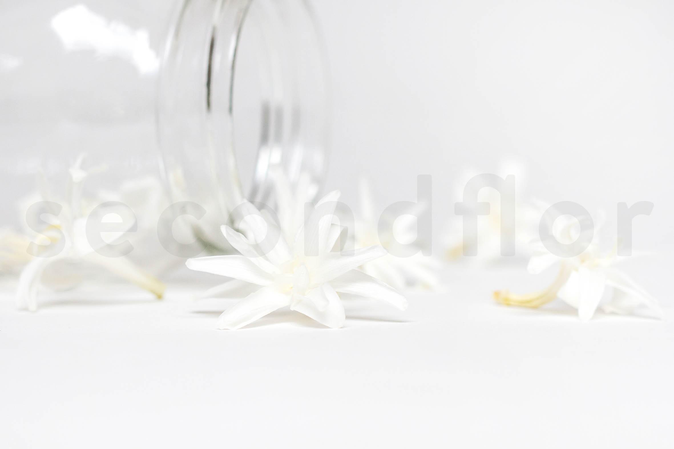 Preserved Tuberose Heads White
