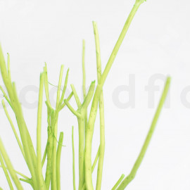 Mitsumata - Vert