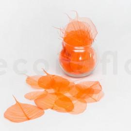 Skeleton Leaves - Boîte de 200 - Orange
