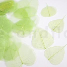 Skeleton Leaves - Boîte de 200 - Vert pomme