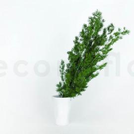Ming Fern Stabilisé - Vert