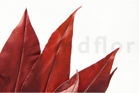 Preserved Tropical Leaves - Red