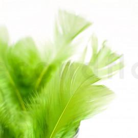Plume - Vert